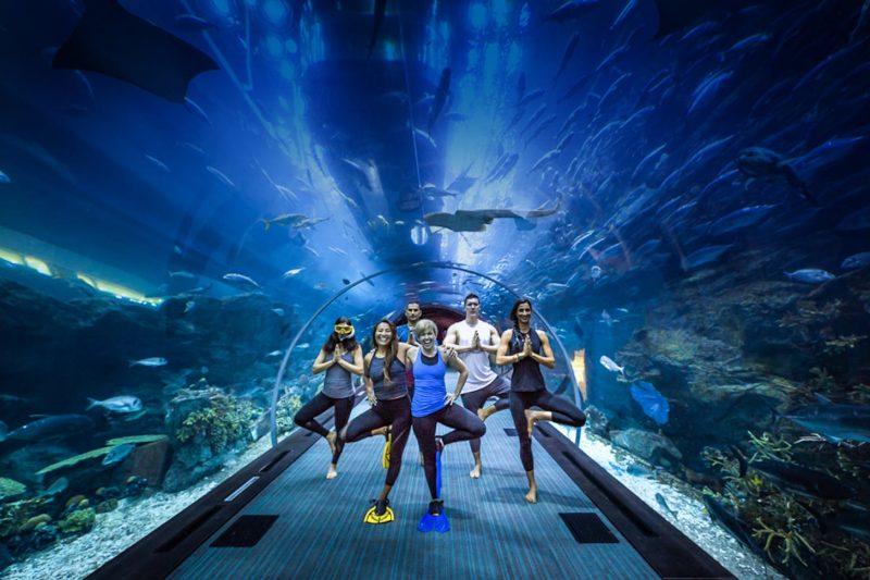 dubai-mall-aquarium-and-underwater-zoo
